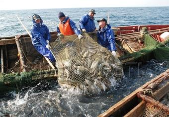 Рекордный улов лосося скупят китайцы