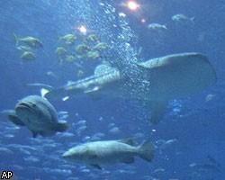 Сочинская таможня погубила 4 тыс. экзотических рыб на $480 тыс.