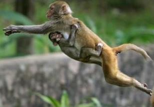 Президент Замбии выселил обезьян из своего дворца