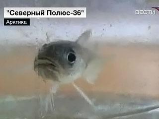 """Ледокол """"Ямал"""": уникальные кадры арктической экспедиции"""