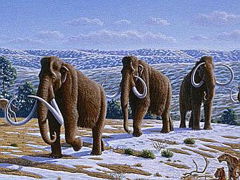 В Уфе обнаружили кость мамонта