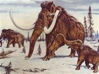 Раздел.  Ученые доставили в Якутск хорошо сохранившуюся тушу мамонтенка, найденную неподалеку от села Юкагир...