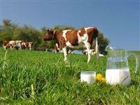Немецкие ученые разработали новую технологию пастеризации молока