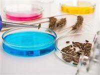 Красноярские ученые изобрели наночастицы для защиты и роста сельхозкультур