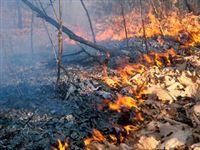Ситуация с лесными пожарами в России сейчас уже хуже, чем по итогам прошлого года