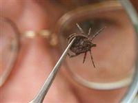 Ученые обнаружили в России новый вид клещевого боррелиоза