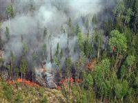 В Сибири тушат пожары на территории в 700 гектаров