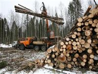 Сделали зарубки: Красноярский край наращивает переработку кругляка