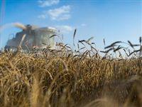 Возврат российского зерна в Турцию оказался очень кстати