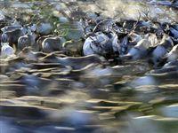"""Около 6% тундры Ямала превратились в """"пустыню"""" из-за вытаптывания пастбищ оленями"""