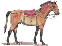 Генетики раскрыли секреты легендарных скифских лошадей