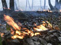 Основная причина природных пожаров этой весной - пал сухой травы