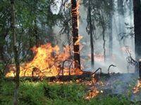 Сокрытие лесного пожара обернется крупным штрафом