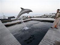 Пентагон увольняет боевых дельфинов
