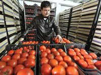 Турецким томатам велено сидеть дома