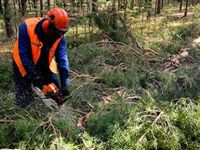 «Регионы-двоечники» отстранят от управления лесами