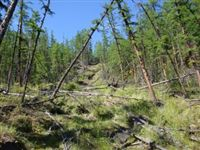 Оползни в зоне вечной мерзлоты вызывают резкий рост выбросов парниковых газов