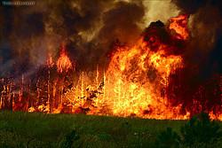 Лесные пожары охватили полстраны